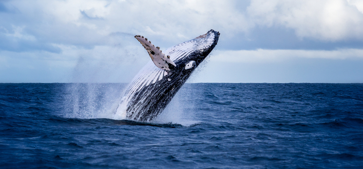 Six whale-watching hot spots that will blow you away