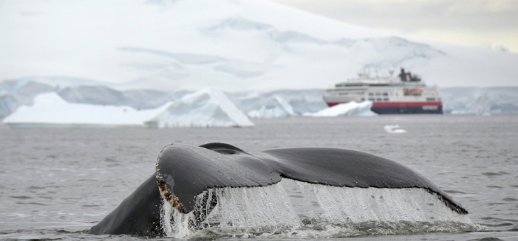 Antarctica all-inclusive with flights packages on sale now