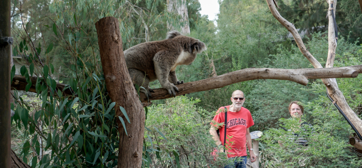 101 ways to holiday in Australia: Connect with wildlife
