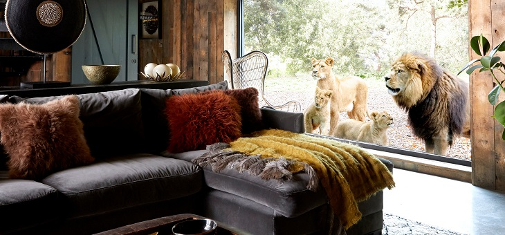 Lions-at-window