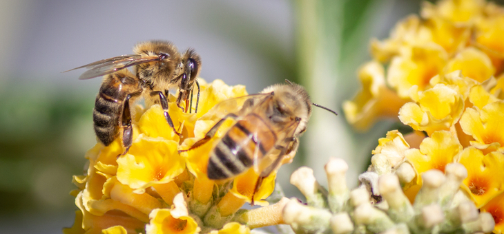 bees on flower