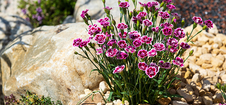 How to turn rubble into a garden