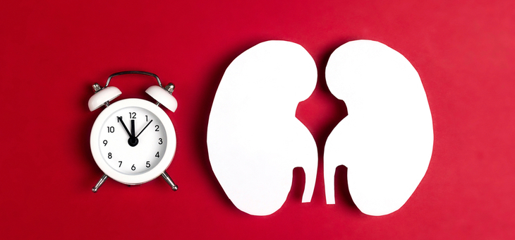 What our 'kidney clock' can tell us about our age on the inside
