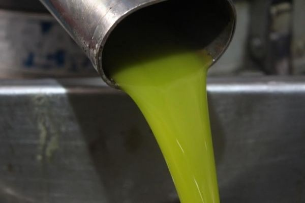 Extra virgin olive oil for export