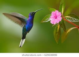 Image result for pictures of real hummingbirds