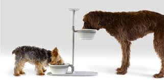 Are Elevated Dog Bowls any Good…? (Pros & Cons) | Daily Dog Stuff