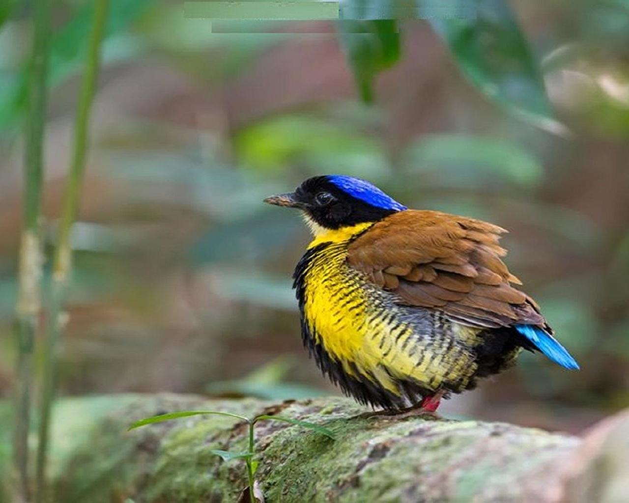 Beautiful Birds Wallpaper Photos Download